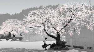 cherry-blossom-anime